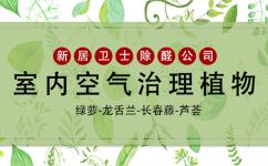 能吸收甲醛进行室内空气治理的几类植物你知道哪些?